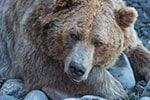 Chronotypy Niedźwiedź