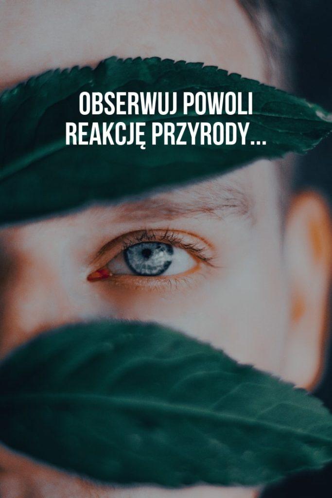 rosnijwsile.pl Jak spełniać marzenia? Obserwuj reakcję przyrody