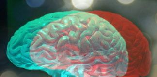 rosnijwsile.pl Co robić, aby zachować sprawny umysł w zdrowiu, sile i dobrej formie?