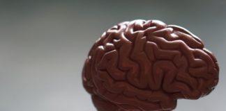 rosnijwsile.pl Jak działa mózg? 12 sposobów na supermózg