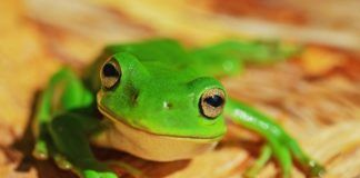 rosnijwsile.pl Jak jeść żabę? 21 sposobów osiągnięcia maksymalnej produktywności i sukcesu