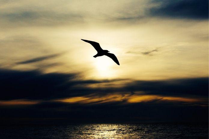 Jakim ptakiem jesteś? Ptaki trzeciego rodzaju